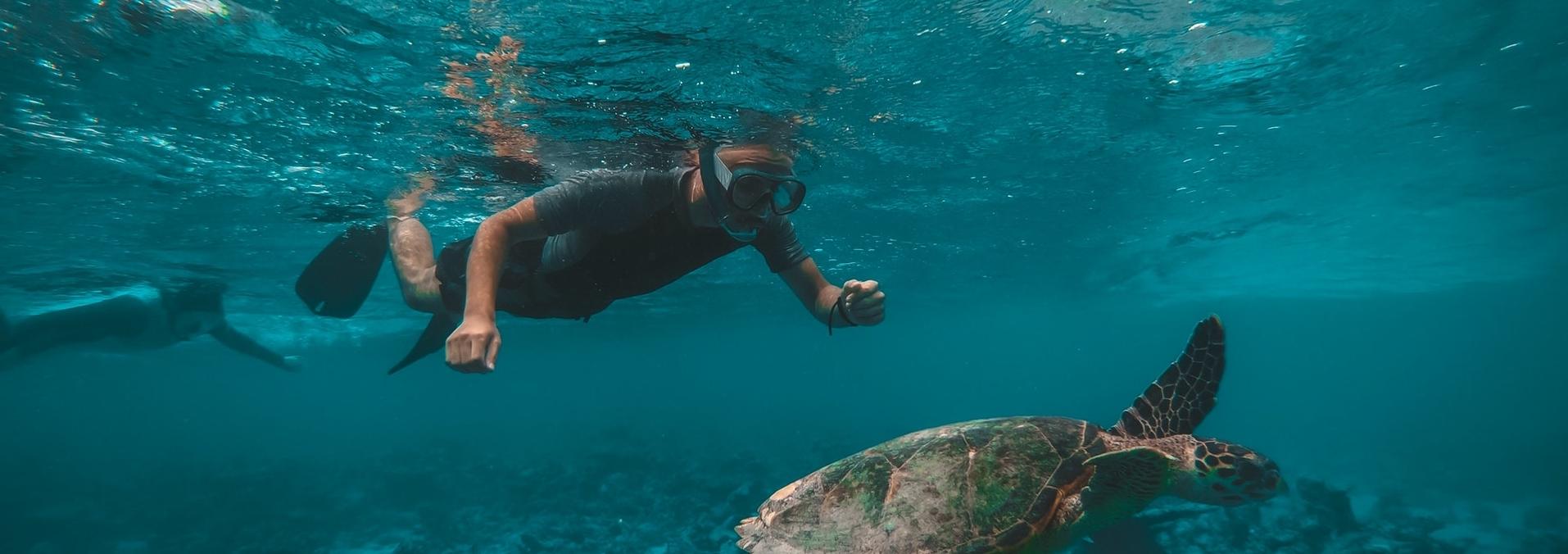 Aquatic Training Internship